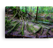 Cascading Roots Canvas Print