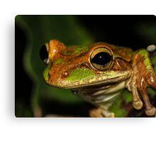 Treefrog Portrait Canvas Print