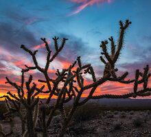 Mojave Desert Sunset by Jim Stiles