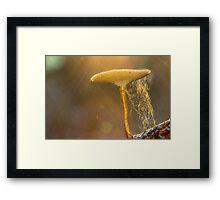 Glorious Fungi Framed Print