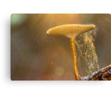 Glorious Fungi Canvas Print