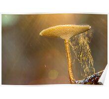 Glorious Fungi Poster