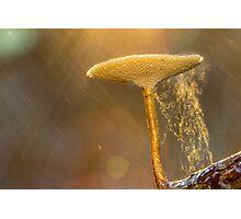 Glorious Fungi Photographic Print
