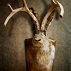 Jackalope by Alex Preiss