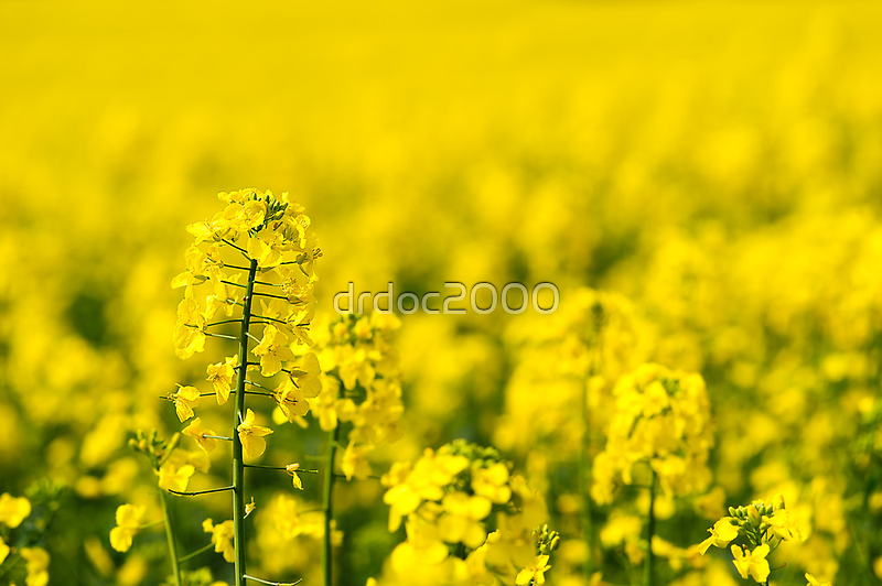 rape yellow sky blue by drdoc2000