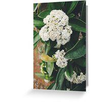 White Glory Greeting Card