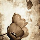 Vintage Flowers Sepia-Black-White by Denis Marsili