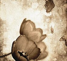 Vintage Flowers Sepia-Black-White by Denis Marsili - DDTK