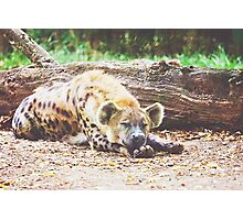 Sleeping Hyena Photographic Print