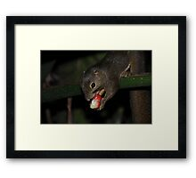Squirrel Finds a Treat Framed Print