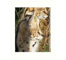 Servals Art Print