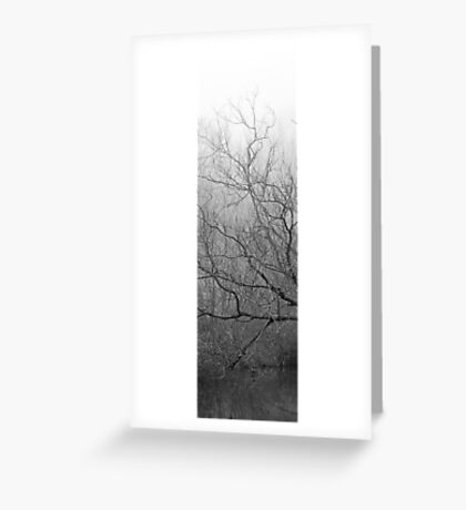Foggy Branches Over a Lake Greeting Card