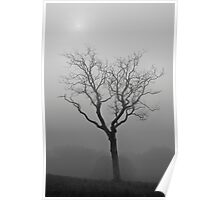 Foggy Tree and Sun Poster