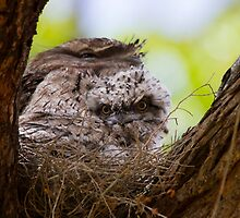 Chick In The Nest by byronbackyard