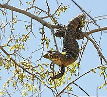 Gecko by Heather Haderly