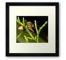 Firefly (1) Framed Print