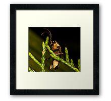 Firefly (2) Framed Print