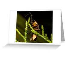 Firefly (2) Greeting Card