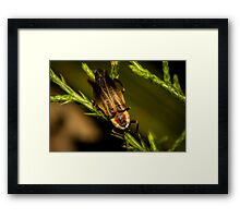 Firefly (3) Framed Print