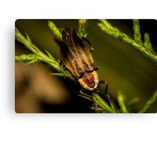Firefly (3) Canvas Print