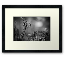 Am I Born To Die? Framed Print