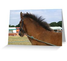 Shire Foal Greeting Card