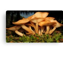 Fungal Beauty - Armillaria tabescens Canvas Print