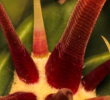 Cacti Hooks Sticker