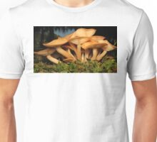 Fungal Beauty - Armillaria tabescens Unisex T-Shirt