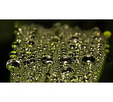 Leaf Water Droplets Photographic Print