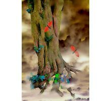 Magic Trees and Butterfly Leaves Photographic Print