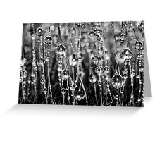 Moss Drops (Black and White) Greeting Card