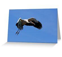Wood Stork in Flight Greeting Card