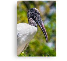 Wood Stork Profile Canvas Print