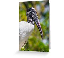 Wood Stork Profile Greeting Card
