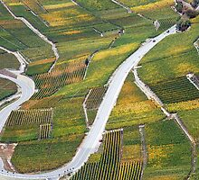 Vineyards in the Rhone-valley - Switzerland by Arie Koene