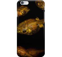 Tropical Tadpole Gathering iPhone Case/Skin