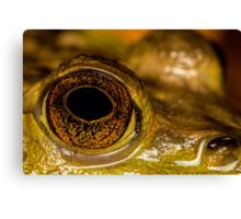 Swamp Eye Canvas Print