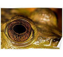 Swamp Eye Poster