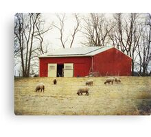 Sheep Farm Canvas Print