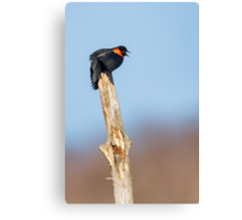 Red Winged Blackbird Canvas Print