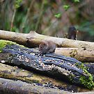 Cheeky Mouse by Carol Bleasdale