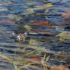 Wood Frog Square by Bill Wakeley