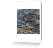 Wood Frog Square Greeting Card