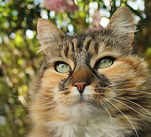 Cat in Spring by meg price