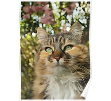 Cat in Spring Poster