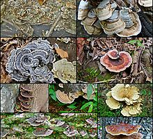 Bracket Fungi Montage - Shelf or Plate Fungi by MotherNature2