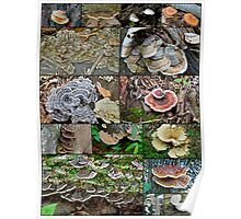 Bracket Fungi Montage - Shelf or Plate Fungi Poster
