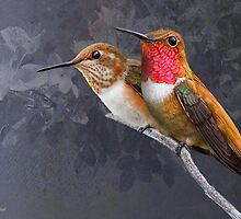 pair of rufous hummingbirds in portrait by R Christopher  Vest
