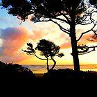 Tree Silhouette..Waldport, Oregon by Diane Arndt